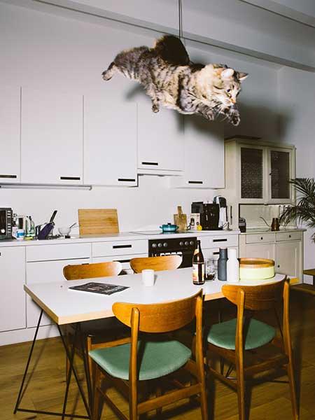 bouncing_cats_11