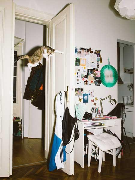 bouncing_cats_12