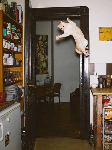 bouncing_cats_4