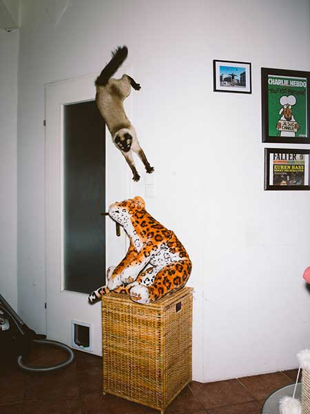 bouncing_cats_7
