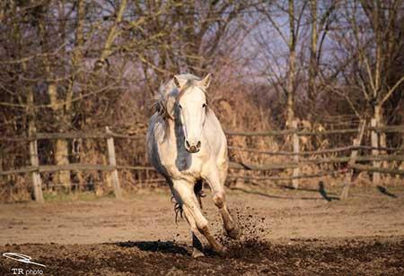 horse_10