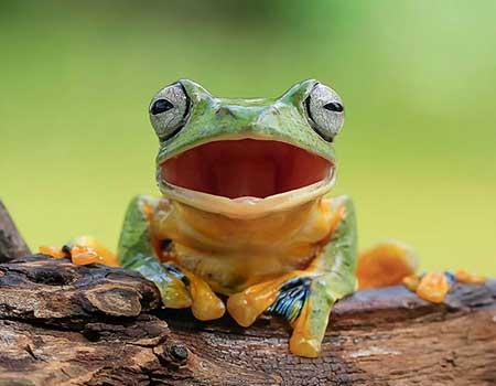 unusual_frogs_10