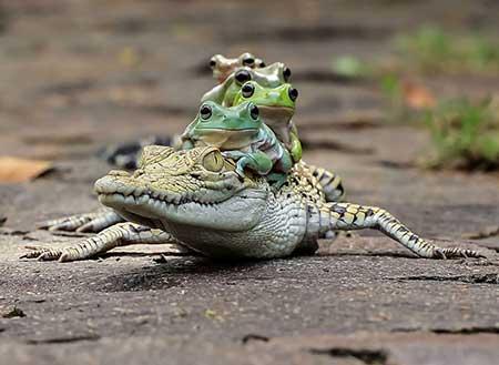 unusual_frogs_2