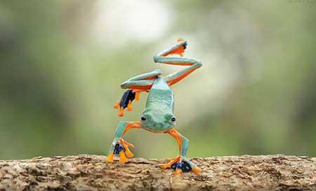 unusual_frogs_3
