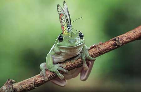 unusual_frogs_4