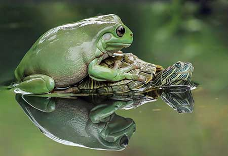 unusual_frogs_6