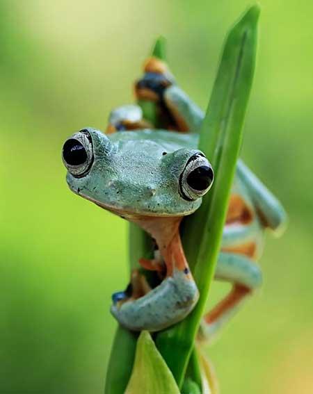 unusual_frogs_8