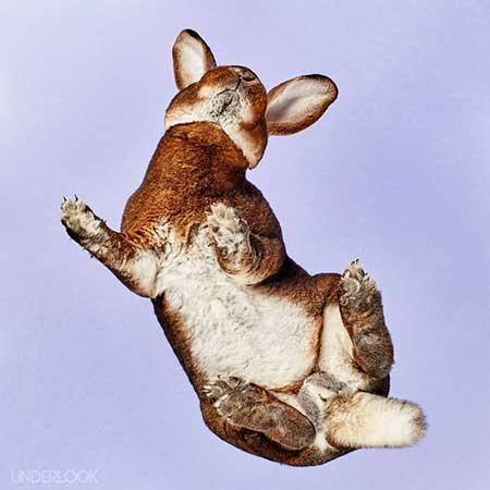 rabbits_10